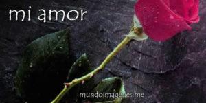 Mensajes de Amor para pedir perdón a tu pareja, novi@ o relación
