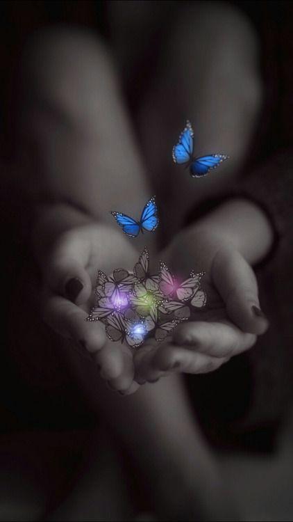 Imágenes De Flores Y Mariposas Hermosas Para Compartir