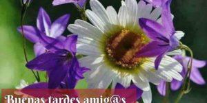"""49 Bonitas imágenes de """"Buenas tardes"""" con frases alegres"""