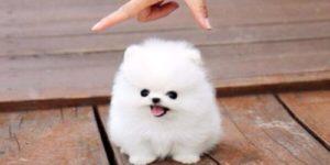 50 adorables imágenes de perros, los cachorros más bonitos y tiernos