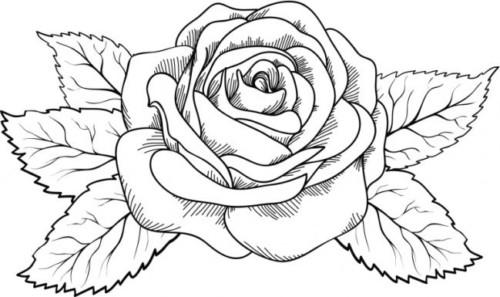Dibujos Flores para Colorear e Imprimir | Imágenes actual
