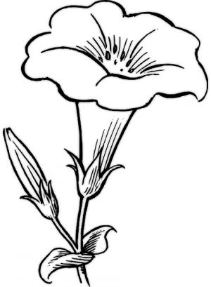 Flores Para Dibujar Reales | www.bilderbeste.com