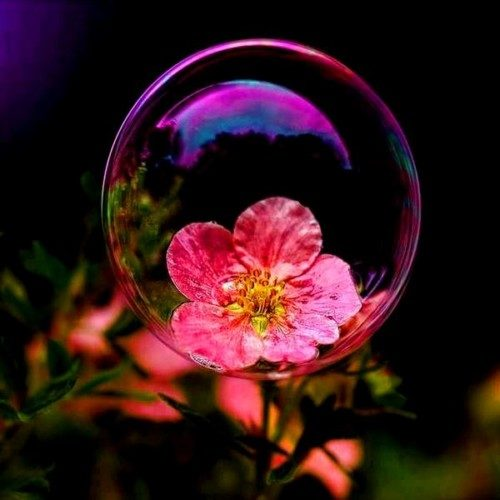 Imágenes De Flores Naturales Flores Con Frases Flores De