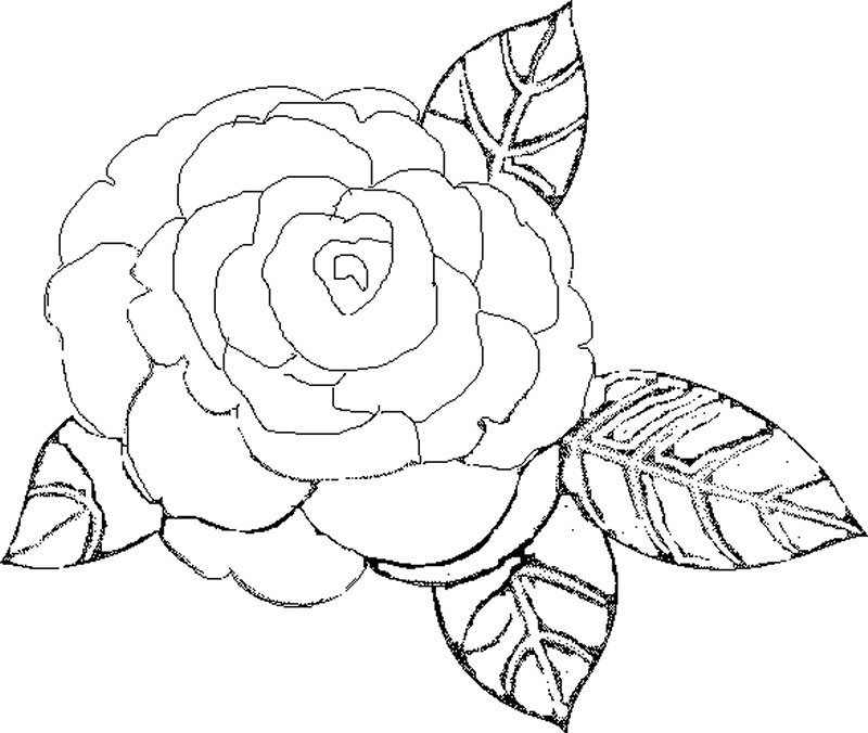 Imagenes De Rosas Bellas Para Dibujar