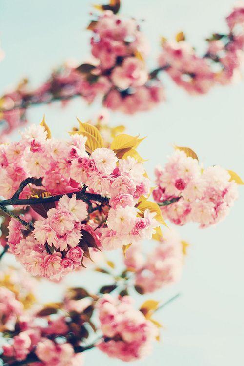 45 Fondos Tumblr De Flores Increibles